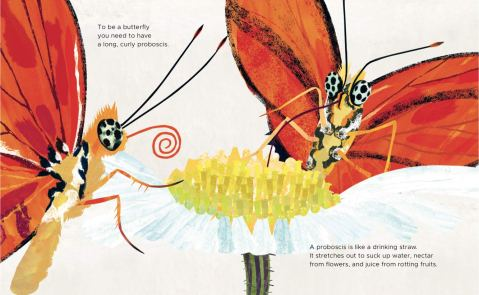 How to be a butterfly - Amazon 3