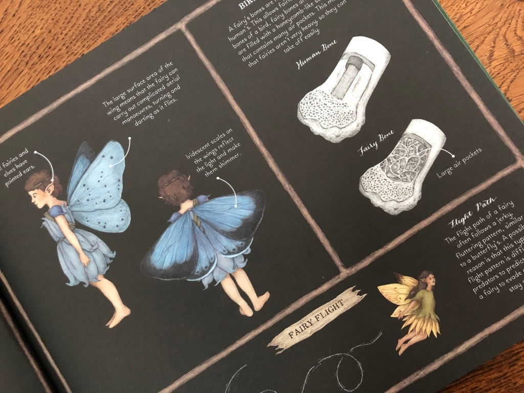 A Natural History of Fairies by Emily Hawkins & Jessica Roux anatomy of a fairy