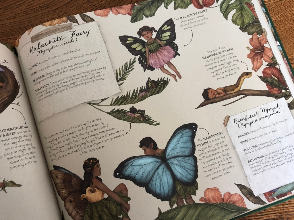 A Natural History of Fairies by Emily Hawkins & Jessica Roux fairy in the rainforest